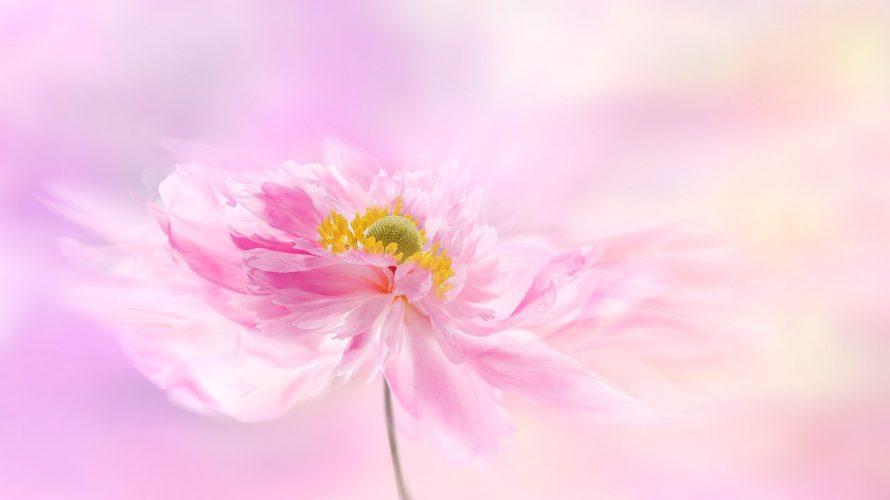 ここにしか咲かない花〜あなたの中にだけ咲く花